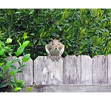 Poppin' in to Say Hello! Photographic Print