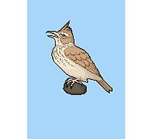Pixel / 8-bit Crested Lark Photographic Print