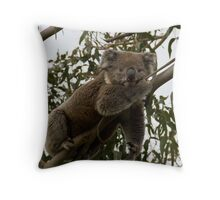 Hangin' with the Koala's - Great Ocean Walk, Cape Otway Throw Pillow