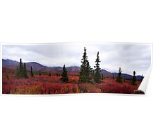 The Colors Of Denali - Alaska Poster