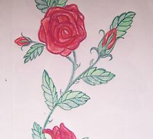 A rose is a rose is a rose... by Roger-Cyndy