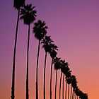 Redlands Palm Sunset by photosbyflood