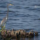 River Sticks by JpPhotos