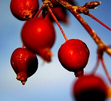 Red Berries by Guinevere White