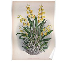 Iconagraphy of Orchids Iconographie des Orchidées Jean Jules Linden V4 1888 0114 Poster