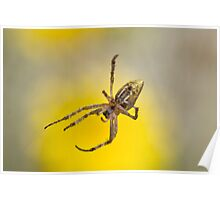 Yellow Weaver Poster