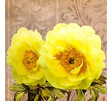 Butter yellow Peonies, floral art Photographic Print