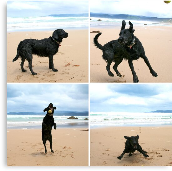 Omar at Apollo Bay by Ainslie Fraser