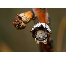 The Furry Seed Photographic Print