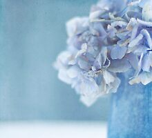 Hydrangea Blues by Jill Ferry