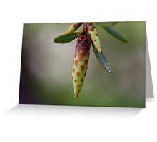 Spring Awaits! Greeting Card