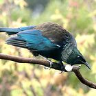 Tui......is that somebody in my patch I see........? by Roy  Massicks