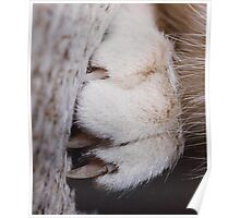 A Mouse's View of a Cat Poster