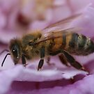 Bee April 2011 by saharabelle