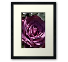 Rose of the Morning Framed Print
