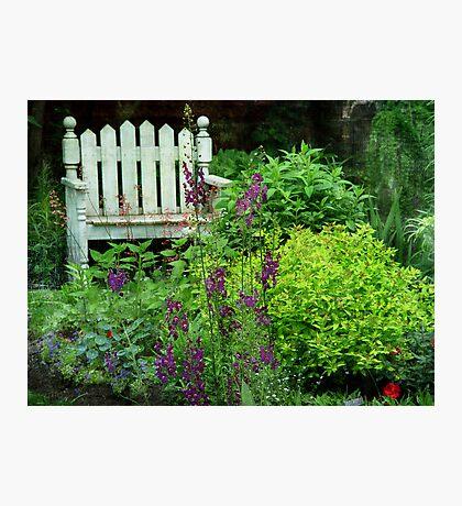 Garden Bench & Verbascum Photographic Print