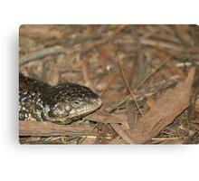 Sleepy Lizard Canvas Print