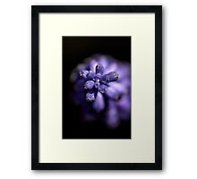 Blues in the shade - Mascari Bulb Framed Print