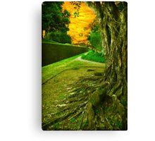Wish To Walk Canvas Print