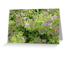 Purple in the Garden Greeting Card