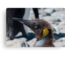 Teenage penguin Canvas Print