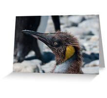 Teenage penguin Greeting Card