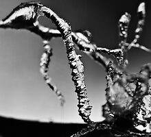 Ice Fingers by Rory Garforth