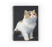 Kitty Spiral Notebook