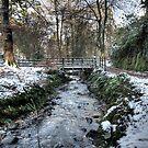 Crawfordsburn Country Park by Jonny Andrews