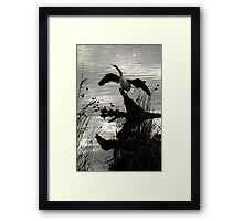 Time to Reflect, Cormorant drying wings Framed Print