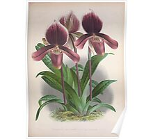 Iconagraphy of Orchids Iconographie des Orchidées Jean Jules Linden V3 1887 0097 Poster