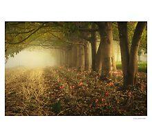 The Garden Photographic Print