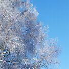 Winter wonderland by Annabelle Evelyn