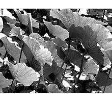China Garden Photographic Print