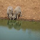 Two at the dam by Jan Pudney