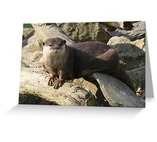 Special African Clawless Otter Greeting Card
