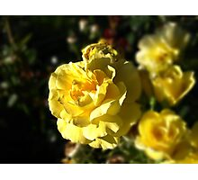 Yellow Gen Love Photographic Print