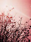 Berry Tree by schizomania