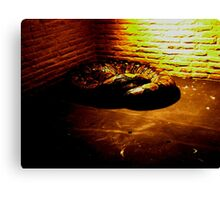 The Reticulated Python Canvas Print