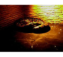 The Reticulated Python Photographic Print