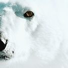 Face cold facts by Owed To Nature