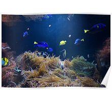 Mystic Colorful Fish Poster