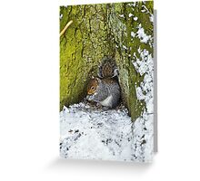 Grey Squirrel with its Food Store Greeting Card