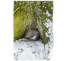Grey Squirrel with its Food Store Poster