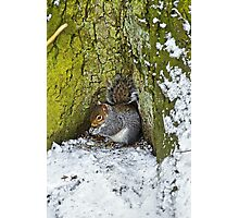 Grey Squirrel with its Food Store Photographic Print