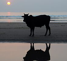 Sunset Bull by lamiel