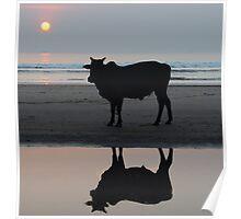 Sunset Bull Poster