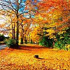 Autumn Gold by Darren Bailey LRPS