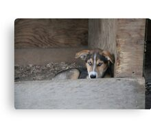 Future Sled Dog Canvas Print
