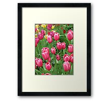 Spring Time Floral Tulips Galore photograph Framed Print